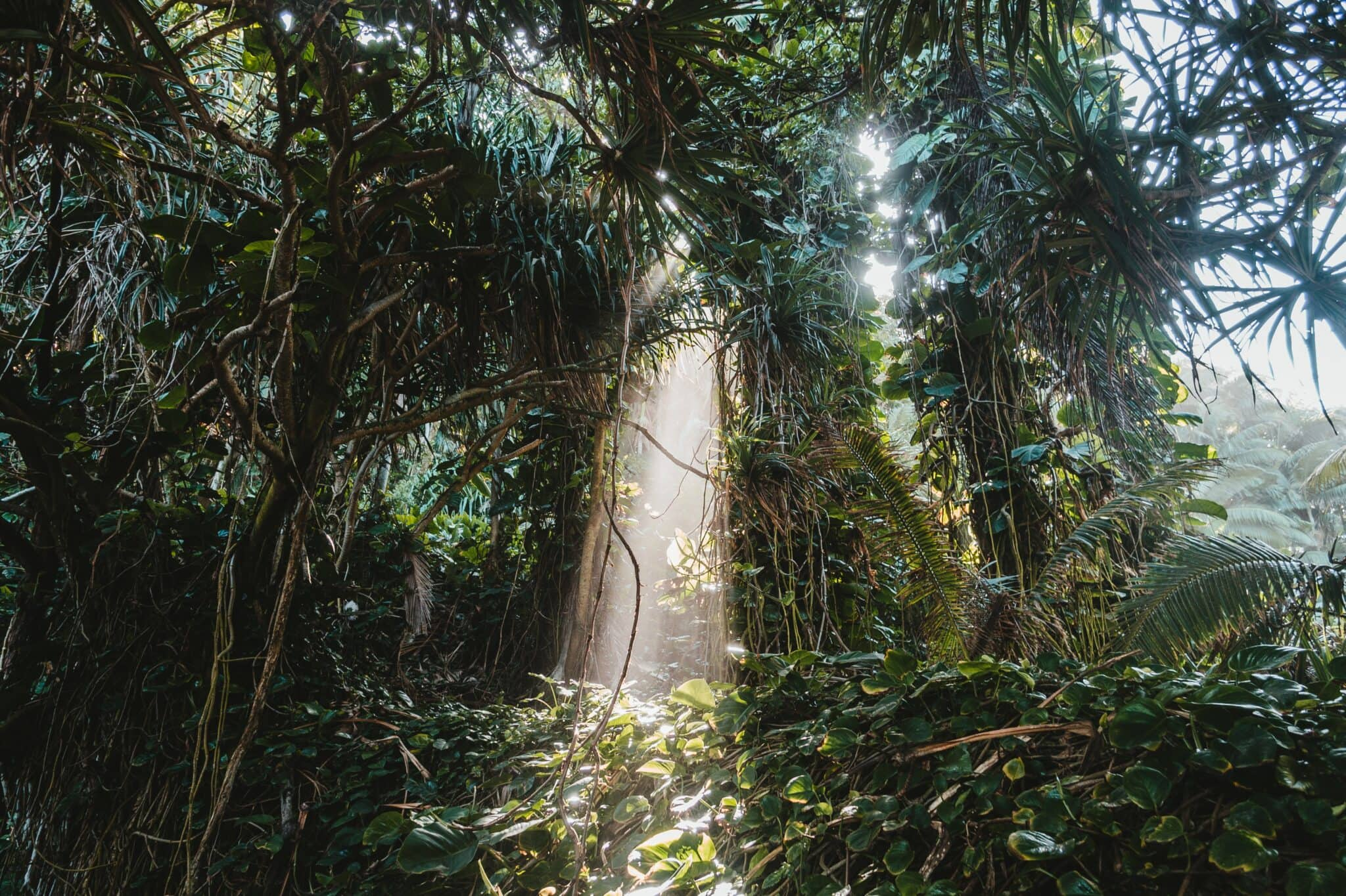 The Koluao Jungle is a magical place for a great imaginary journey for kids!
